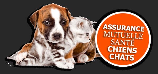 assurance-sante-mutuelle-chien-chat